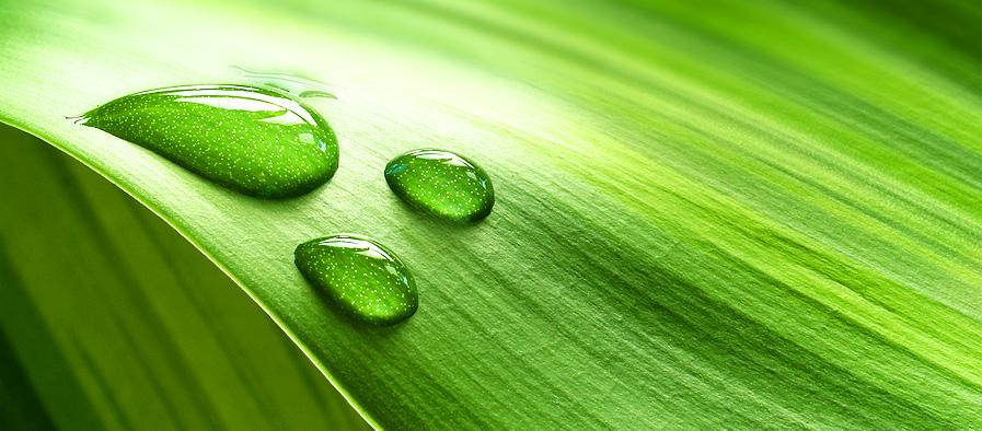 Kształty i faktura roślin Kształty i faktura roślin